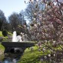 Magnolias au Parc Jouvet