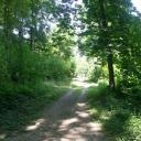 Chemin forestier, la Duchère