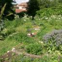 Un jardin plein de vies....