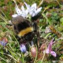 vive la pollinisation !